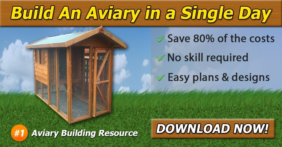Aviary Offer, Best Garden, Home And DIY Tips