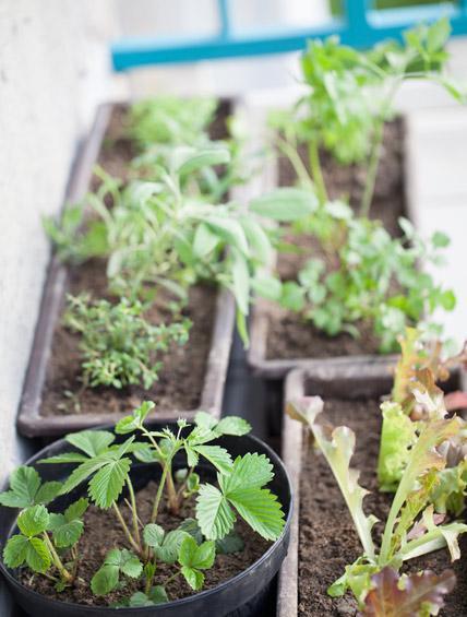 Balcony Garden 12, Best Garden, Home And DIY Tips