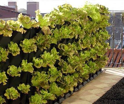 Balcony Garden 7, Best Garden, Home And DIY Tips