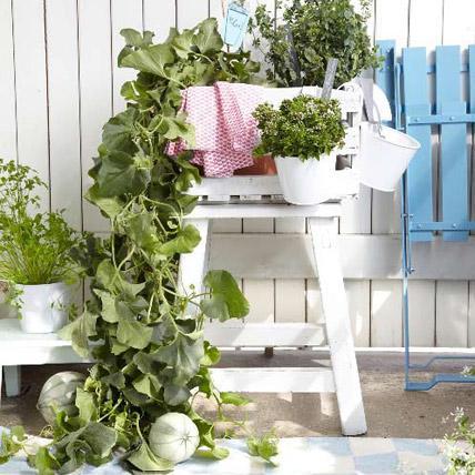 Balcony Garden 8, Best Garden, Home And DIY Tips