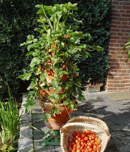 Balcony Garden 9, Best Garden, Home And DIY Tips