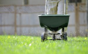 fertilize, Fertilize properly: This will make the lawn lush green, Best Garden, Home And DIY Tips