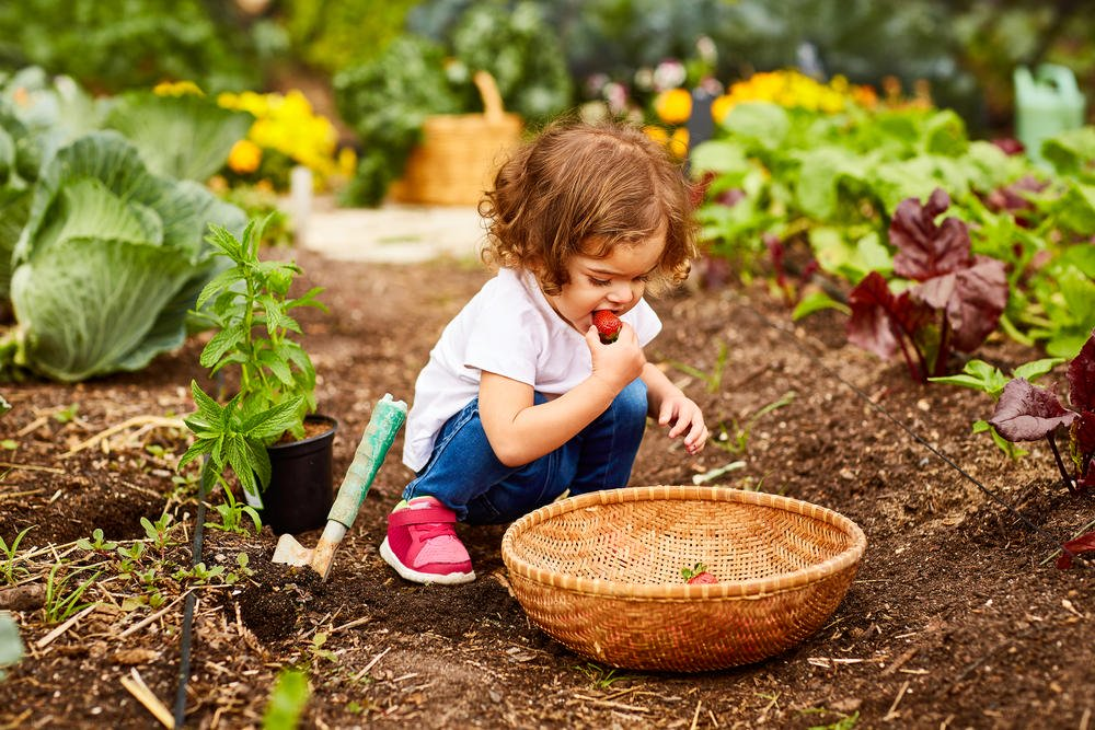 growing vegetables beginners, Growing vegetables for beginners: These five types always succeed, Best Garden, Home And DIY Tips