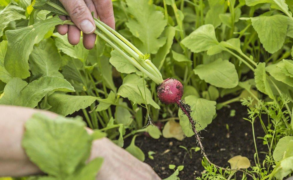 Growing Vegetables 3, Best Garden, Home And DIY Tips