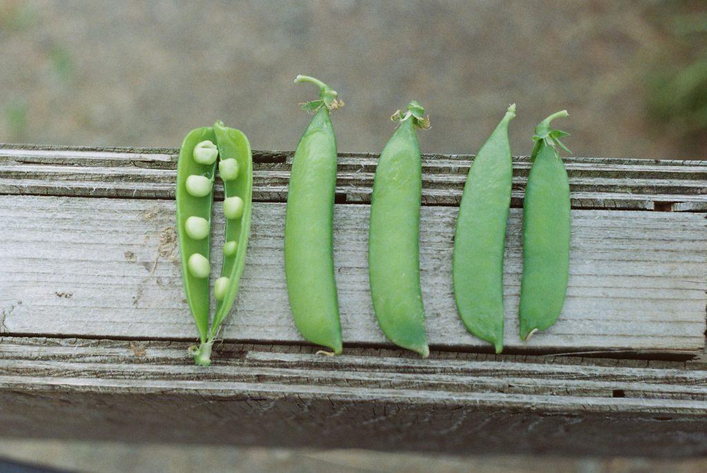 Peas 1024x685, Best Garden, Home And DIY Tips