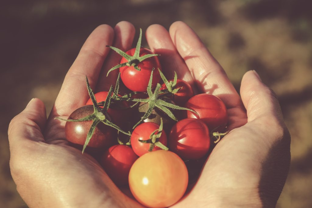 Tomato Plants 1024x683, Best Garden, Home And DIY Tips