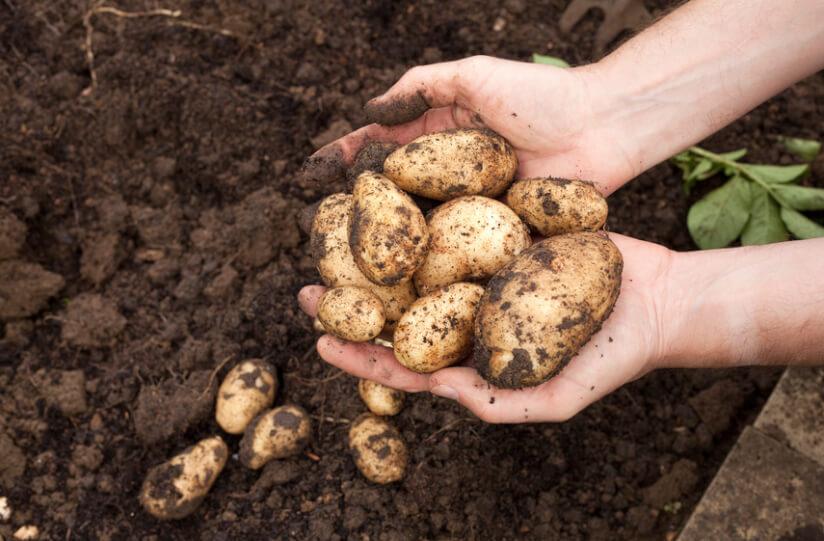 Useful Plants 4, Best Garden, Home And DIY Tips
