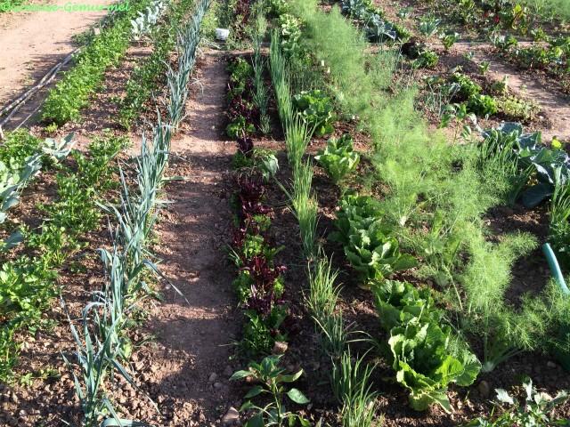 Useful Plants 5, Best Garden, Home And DIY Tips
