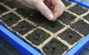 sowing, Vegetable sowing: The right temperature for the preculture, Best Garden, Home And DIY Tips