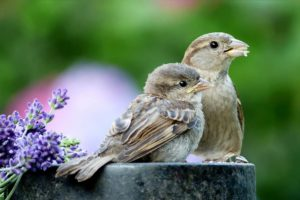 garden birds, Garden birds – How to give them a home in your garden, Best Garden, Home And DIY Tips