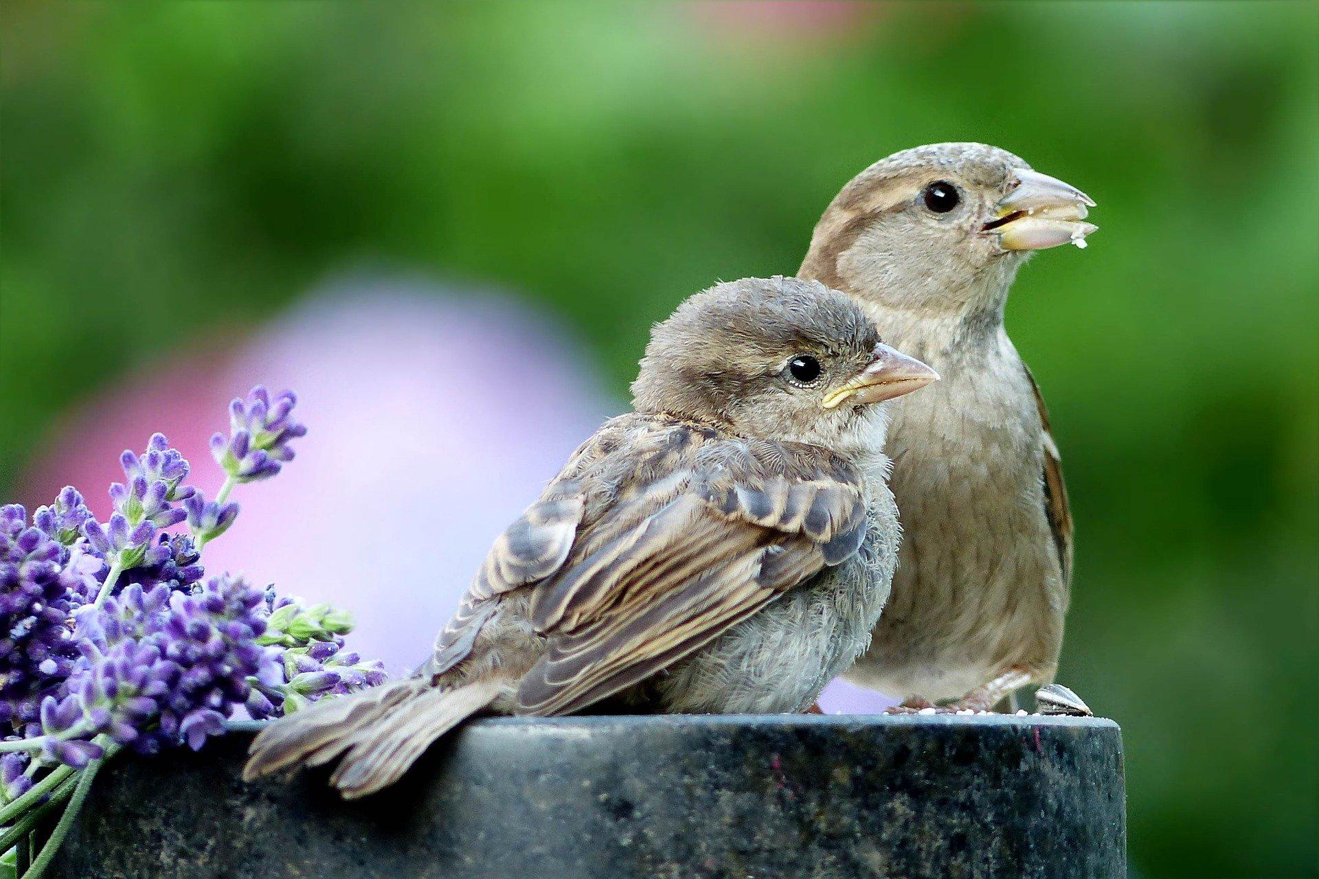 garden birds, Garden birds – How to give them a home in your garden, Best Garden, Home And DIY Tips