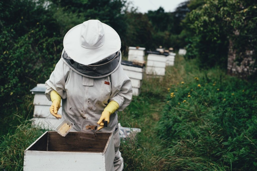 Apiary 1866740 1920 1024x682, Best Garden, Home And DIY Tips