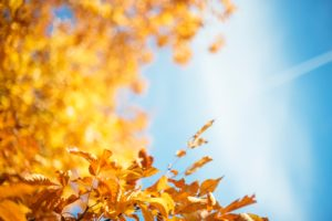 autumn leaves, Use autumn leaves sensibly, Best Garden, Home And DIY Tips