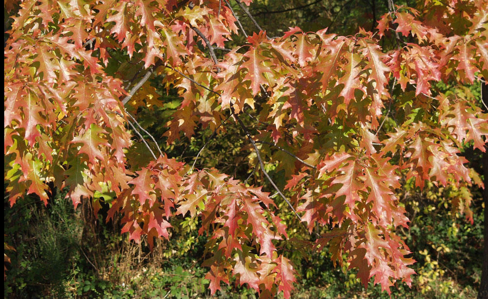 Autumn Leaves 4, Best Garden, Home And DIY Tips
