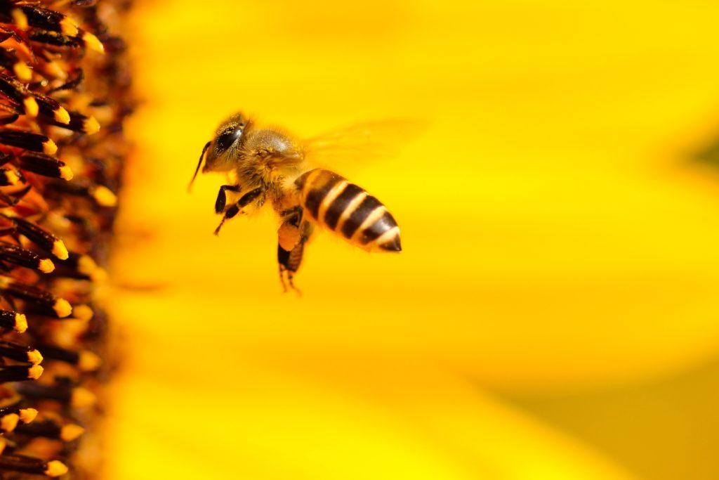 Bee 1948684 1920 1024x683, Best Garden, Home And DIY Tips