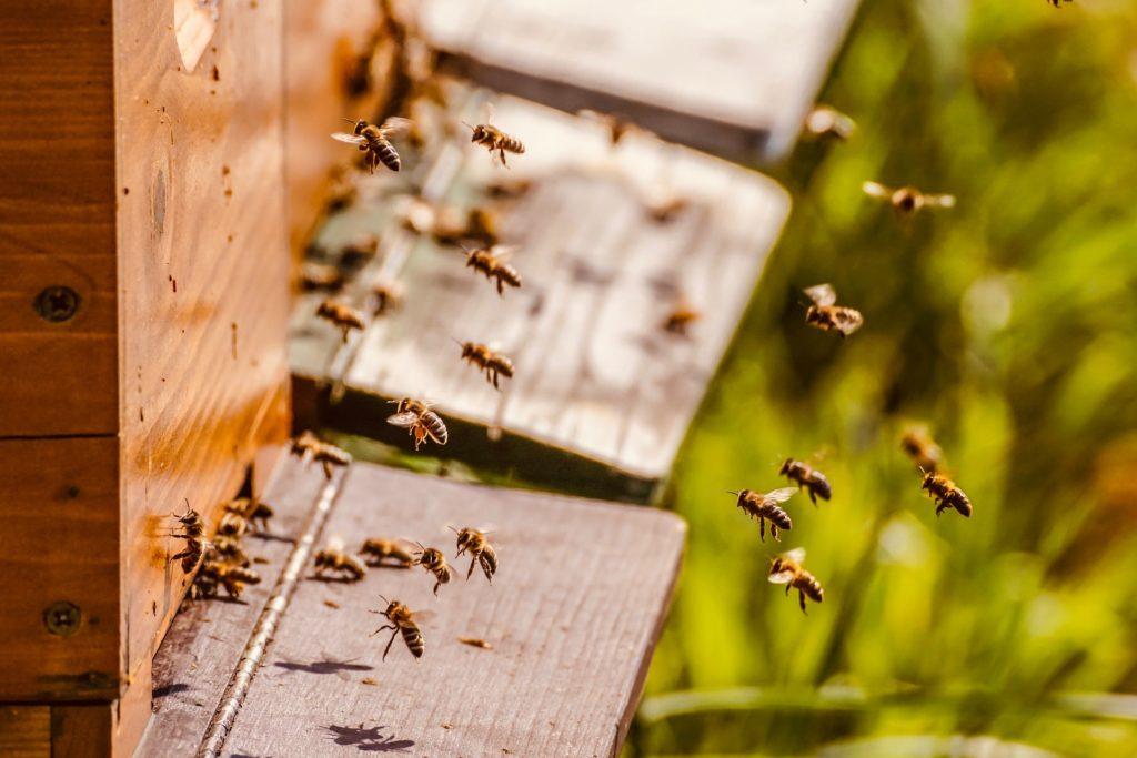 Beehive 5026856 1920 1024x683, Best Garden, Home And DIY Tips