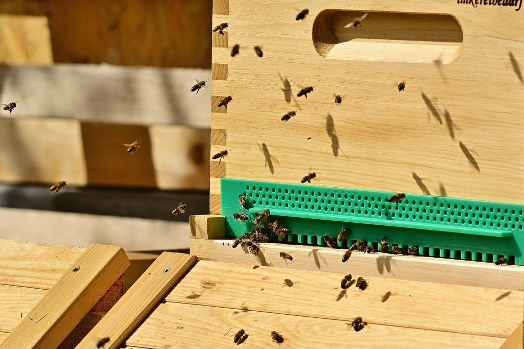 Bees 5051823 1920 1024x683, Best Garden, Home And DIY Tips
