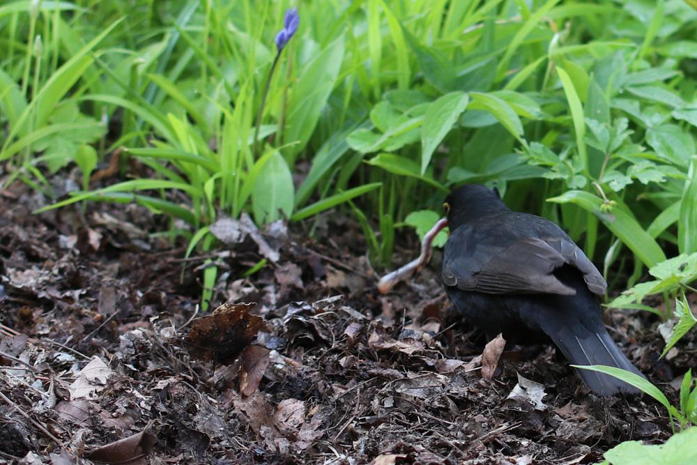 Bird 3, Best Garden, Home And DIY Tips