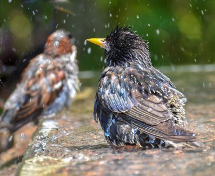 Bird Baths 5, Best Garden, Home And DIY Tips