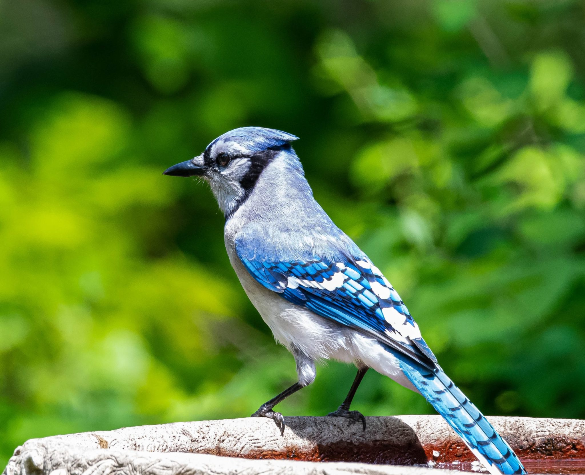 bird baths, The best bird baths for your garden, Best Garden, Home And DIY Tips
