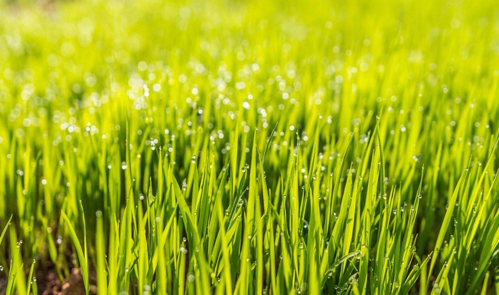 Dew 1867519 1920 1024x606, Best Garden, Home And DIY Tips