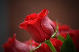 rose garden, How to properly create a rose garden, Best Garden, Home And DIY Tips