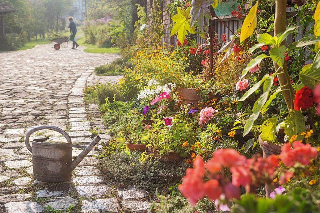 Flowers 2 1024x682, Best Garden, Home And DIY Tips