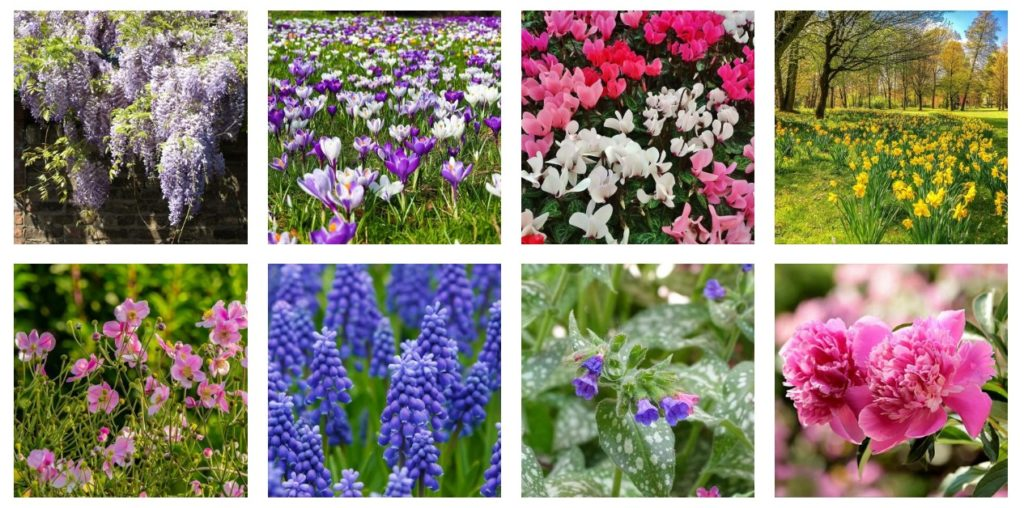 Flowers 3 1024x508, Best Garden, Home And DIY Tips