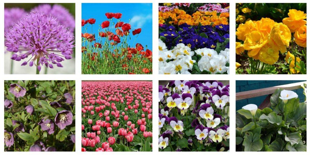 Flowers 4 1024x511, Best Garden, Home And DIY Tips
