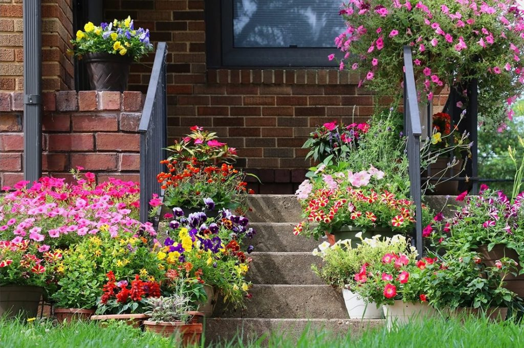 Flowers 5 1024x681, Best Garden, Home And DIY Tips