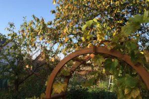 garden winter, How to winterize your garden in autumn, Best Garden, Home And DIY Tips