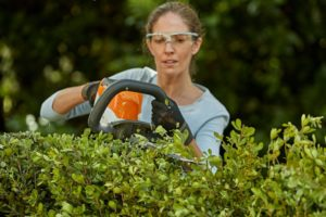 hedge, How to properly care for and trim the hedge, Best Garden, Home And DIY Tips