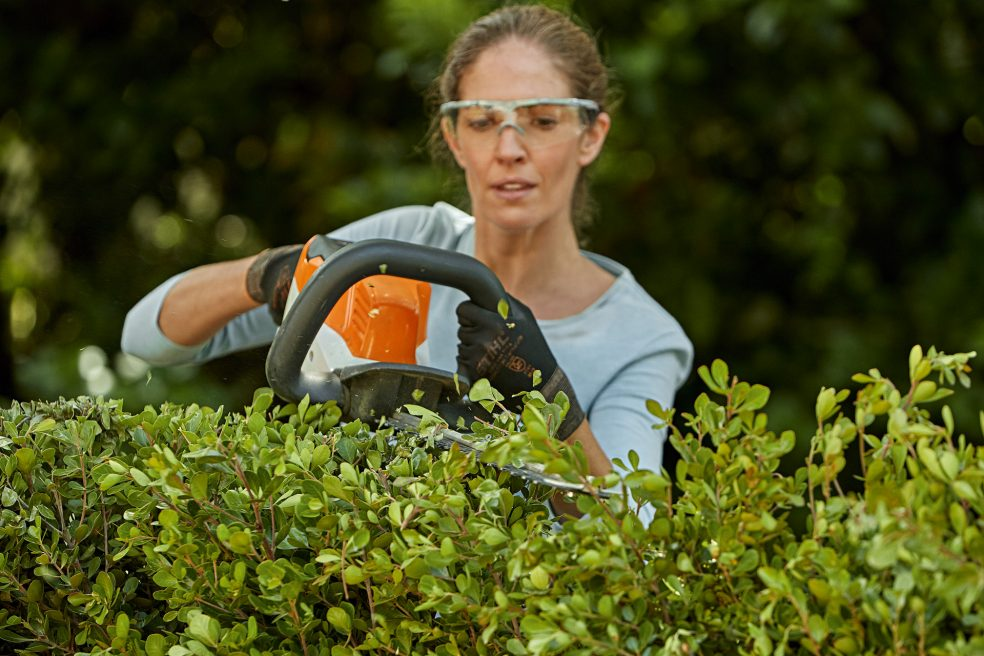 How to properly care for and trim the hedge