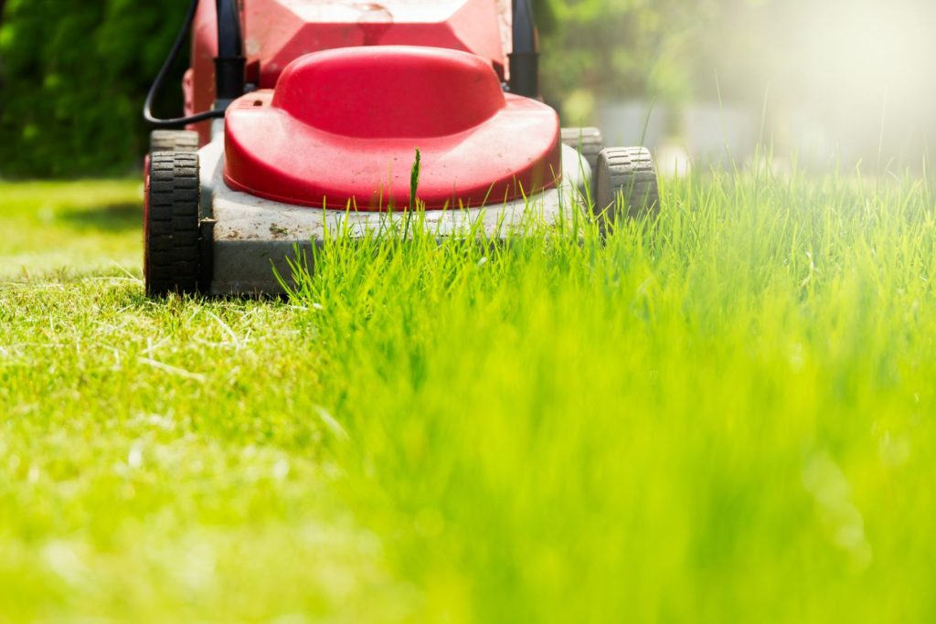 winter lawn, Lawn after winter: first mowing, fertilizing & scarifying, Best Garden, Home And DIY Tips