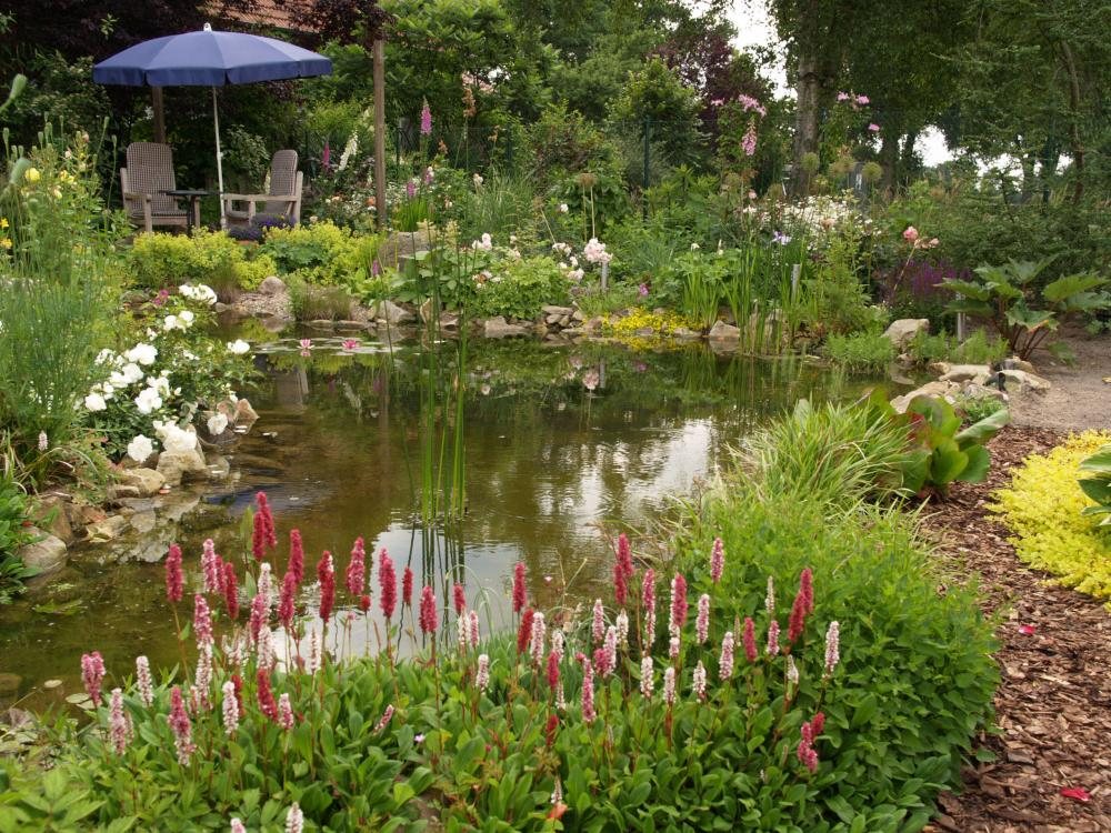 pond, Place the garden pond correctly, Best Garden, Home And DIY Tips