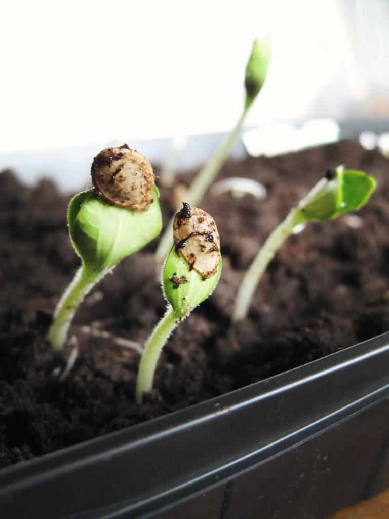 Grow Vegetables 768x1024, Best Garden, Home And DIY Tips