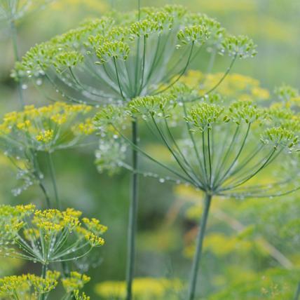 Herb Garden 2, Best Garden, Home And DIY Tips