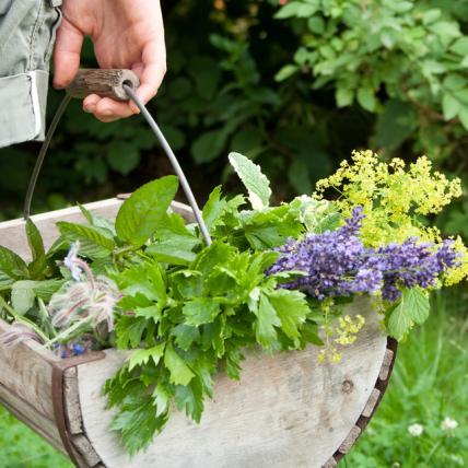 Herb Garden 4, Best Garden, Home And DIY Tips