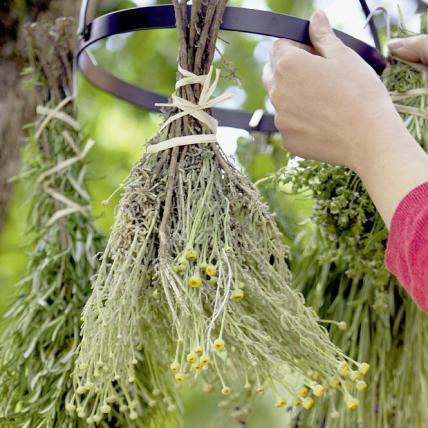 Herb Garden 5, Best Garden, Home And DIY Tips