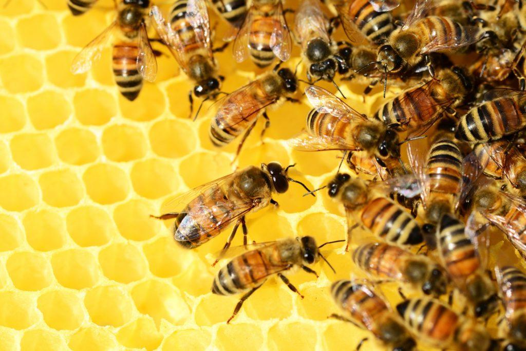 Honey Bees 326337 1920 1024x683, Best Garden, Home And DIY Tips