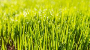 sowing, After sowing: How long does it take for the lawn to grow?, Best Garden, Home And DIY Tips