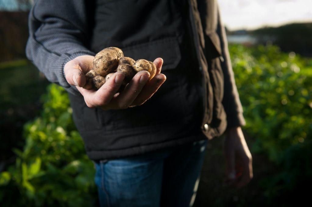 Potato 1024x681, Best Garden, Home And DIY Tips