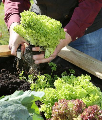 Raised Beds 2, Best Garden, Home And DIY Tips