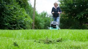 scarify lawn, This is the best time to scarify, Best Garden, Home And DIY Tips