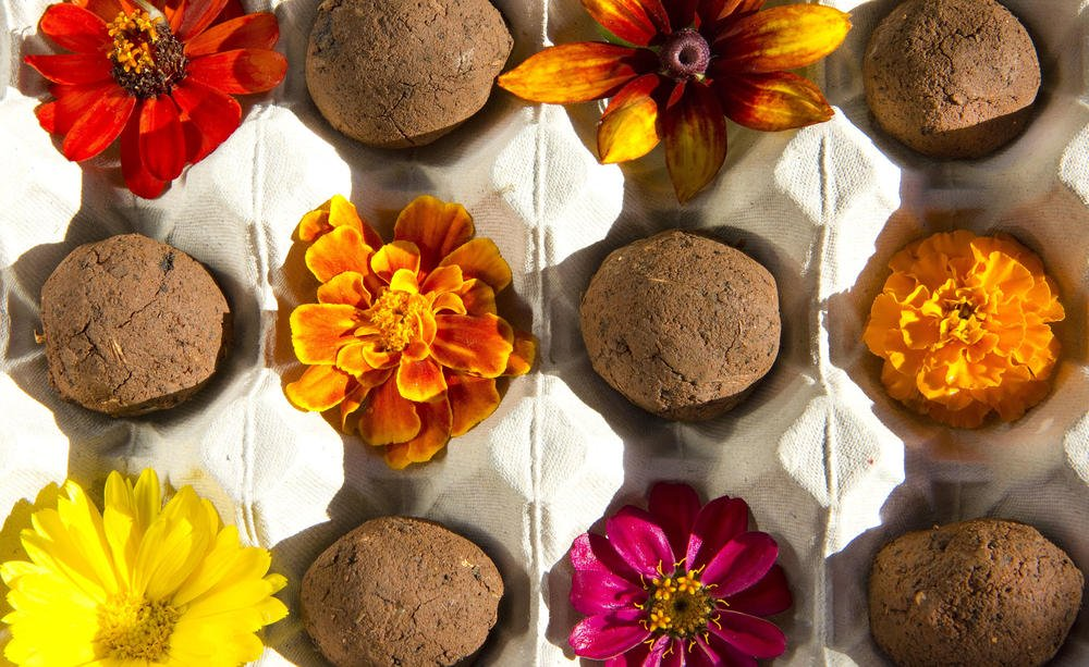 seed bombs, It's so easy to make seed bombs yourself, Best Garden, Home And DIY Tips