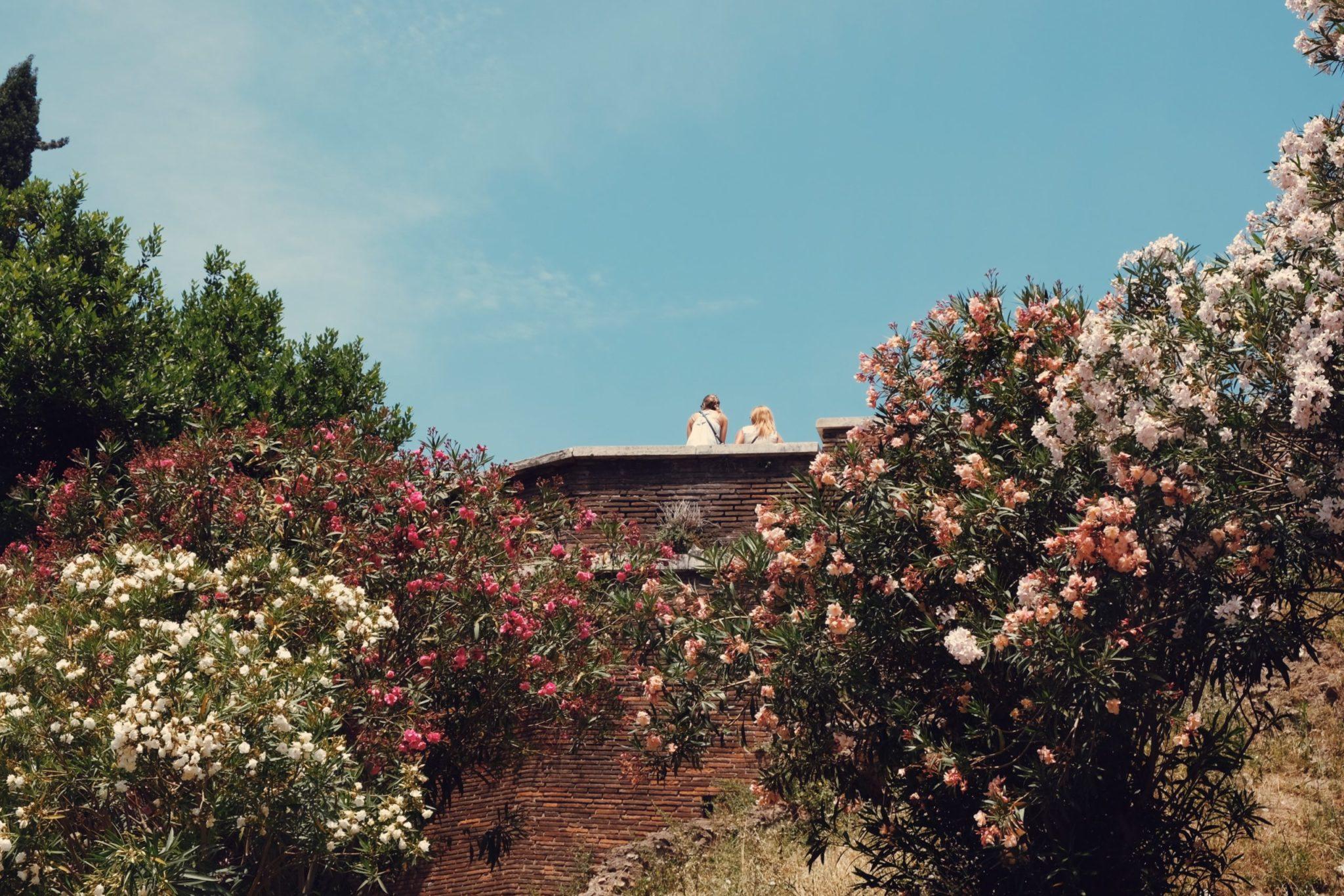 , TOP 10 OF THE MOST POPULAR GARDEN SHRUBS, Best Garden, Home And DIY Tips