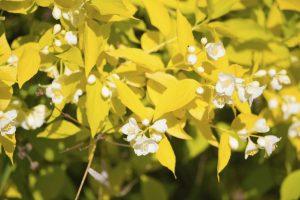 Shrubs 10, Best Garden, Home And DIY Tips
