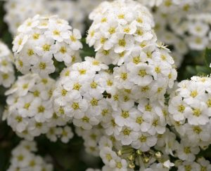 Shrubs 11, Best Garden, Home And DIY Tips