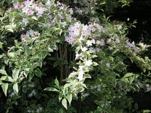 Shrubs 3, Best Garden, Home And DIY Tips