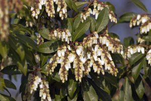 Shrubs 4, Best Garden, Home And DIY Tips
